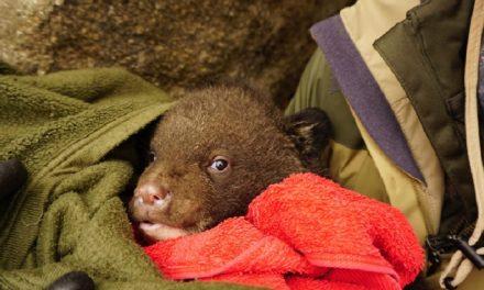 새끼 반달곰 탄생을 축하한다!