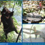 불법엽구에 의해 피해 입은 반달가슴곰